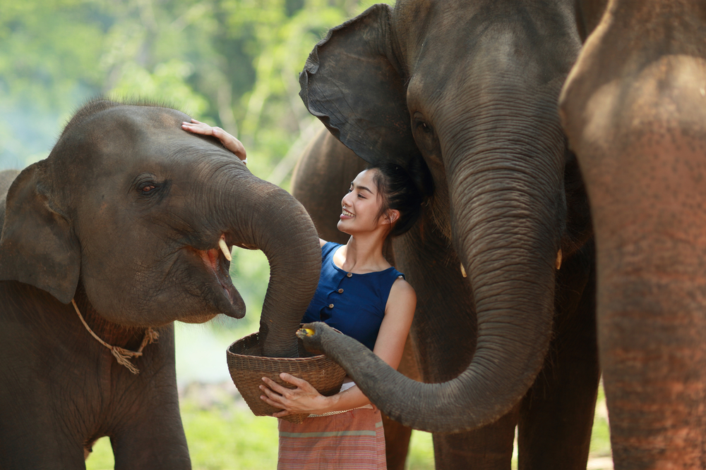 Elephant care, CHiang Mai