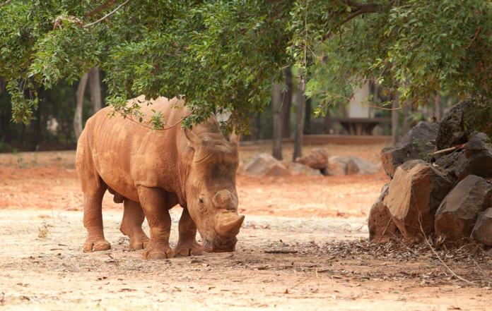 Rhino Conservation is key to keep the natural equilibrium on our planet.