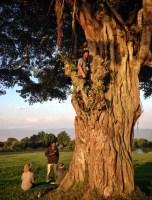 Ngorongoro Crater Rim Tree Climb