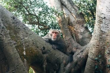 Monkey Mountain (Shoushan, Chaishan), Kaohsiung, Taiwan