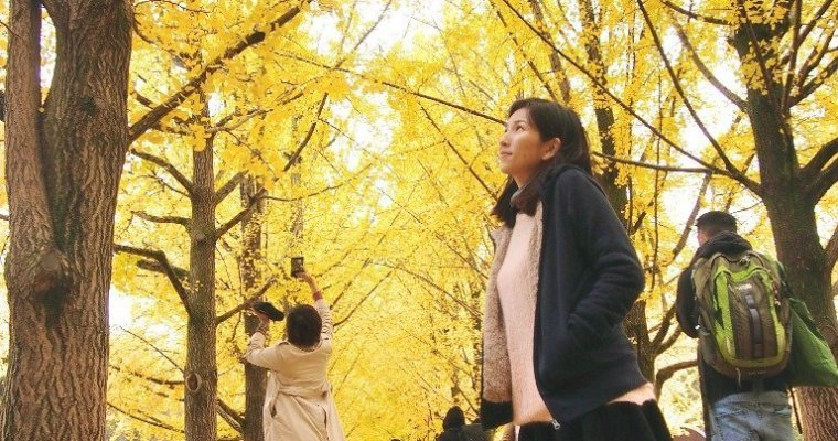 Overview: Things to Do in Nami Island, Autumn (Day trip from Seoul)