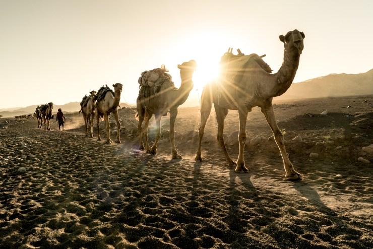 Ethiopia Natalia Stone Camels 2
