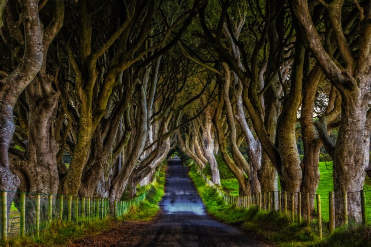 dark-hedges-ireland