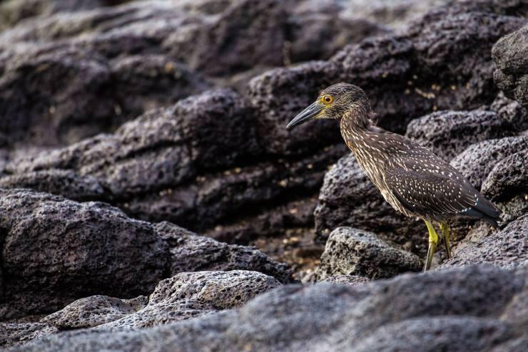 Brendan Van Son Galapagos Islands Ecuador 5