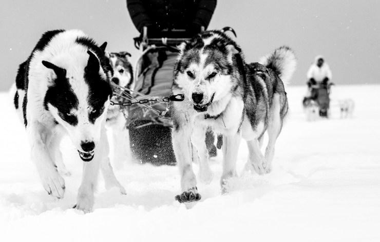 Svalbard 21