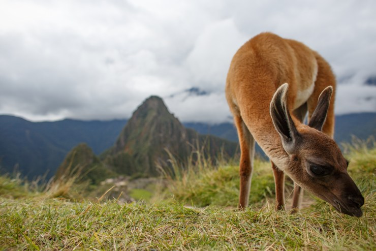 Machu Picchu The Giving Lens Michael Bonocore-1