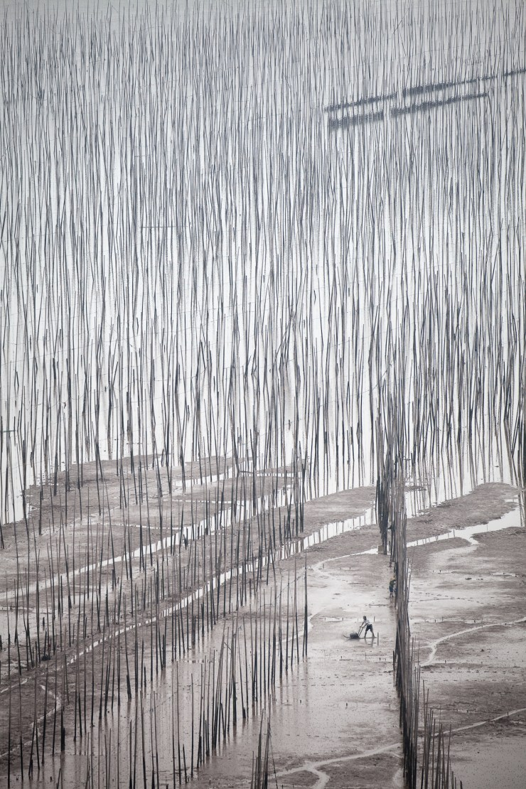 Chinese man using a glider on the mudflats of XiaPu, China. The bamboo sticks create a surreal, painterly scene.