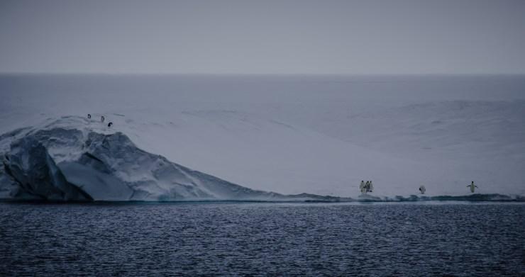 Penguins on the ice shelf