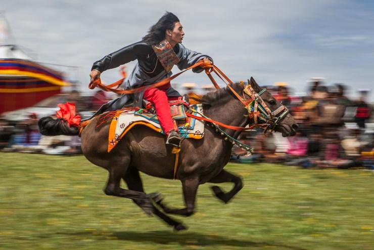 tibetan-racer_10379620303_o