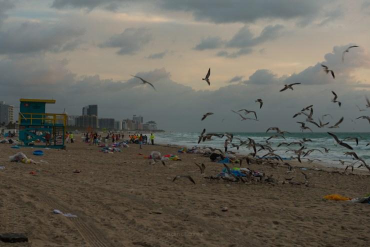 Miami Beach Trash (67 of 238)-8