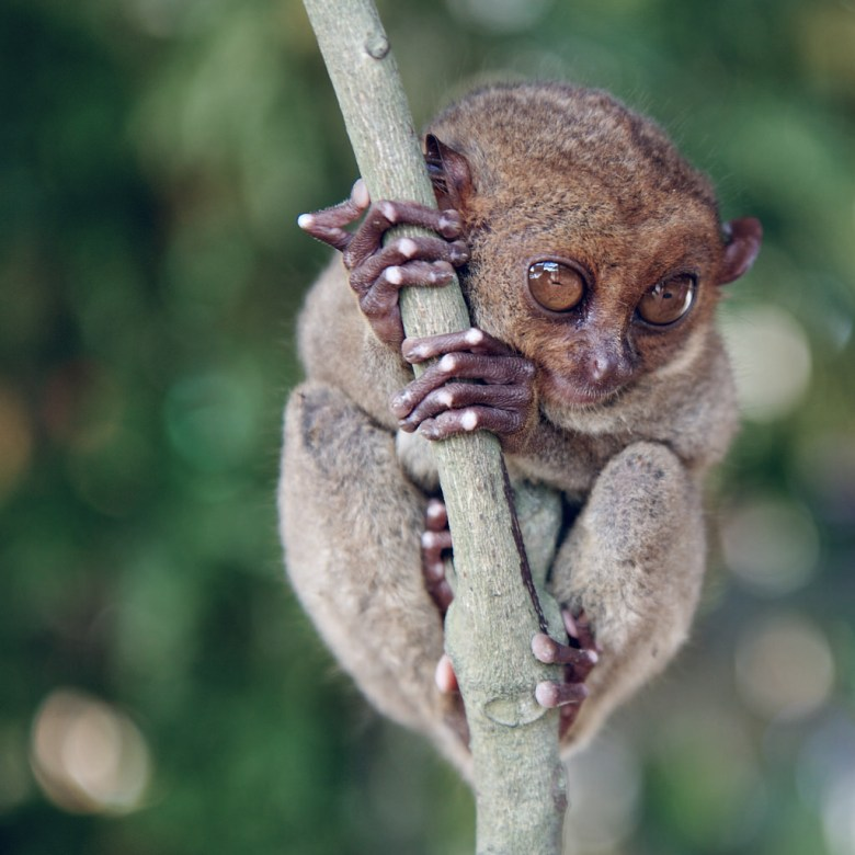7 Incredible Animals You Can Find Only in the Philippines ...  |The Philippines Animal