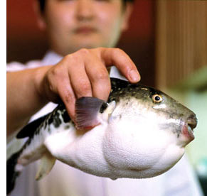 Dangerous Gourmet Adventures: Fugu, Japan