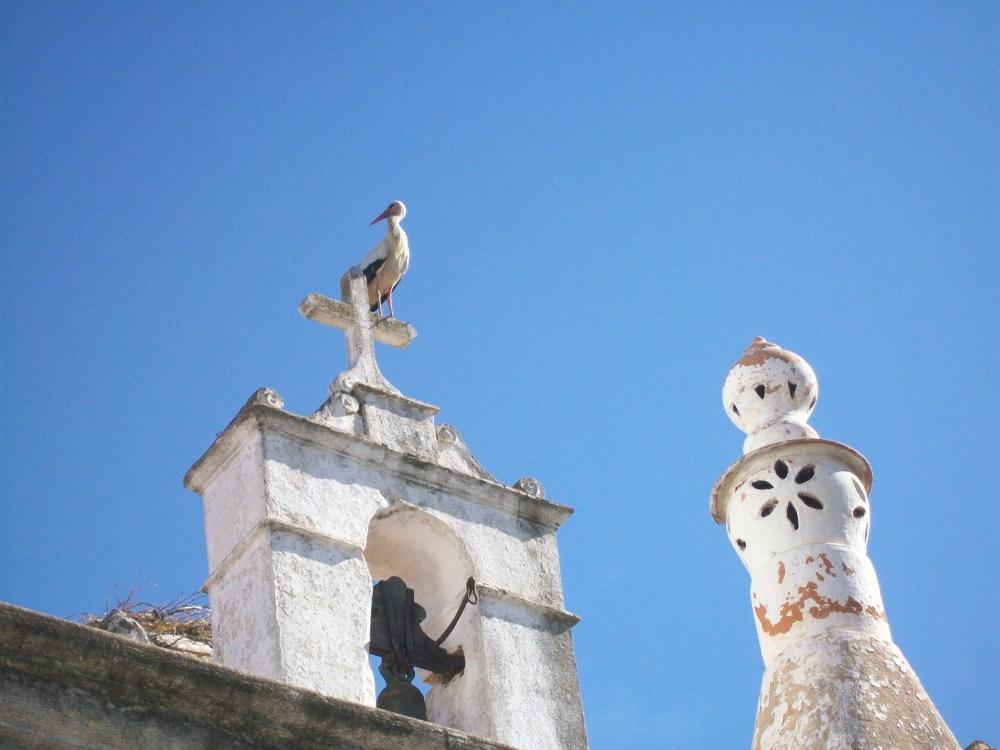 Storks of Faro, Portugal Photos (1/6)