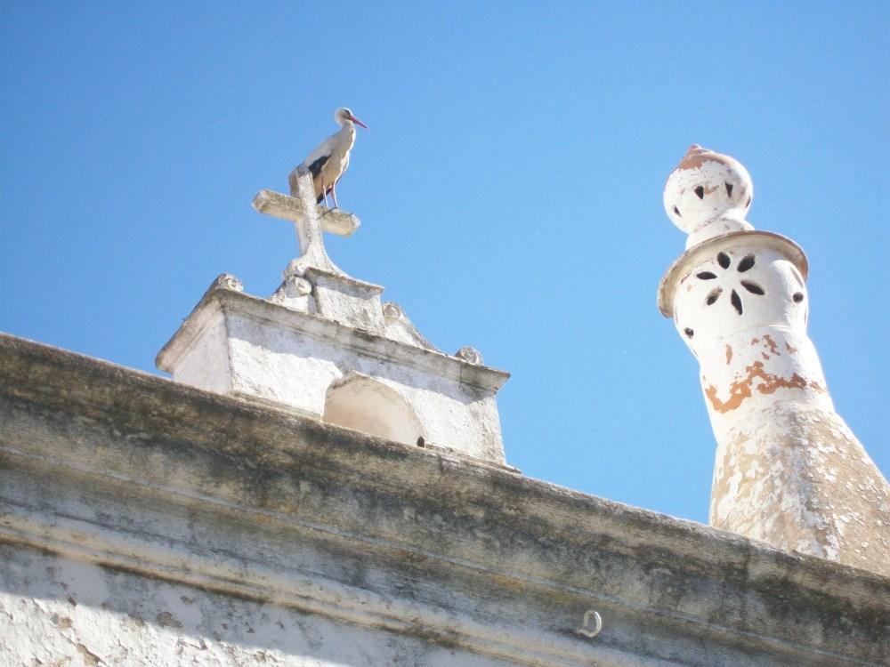 Storks of Faro, Portugal Photos (2/6)