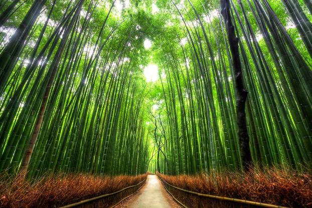 「京都嵐山」的圖片搜尋結果