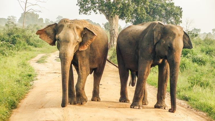 Sri Lanka on a budget: Udawalawe National Park, Sri Lanka