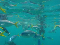 Snorkel spot 1: fish everywhere