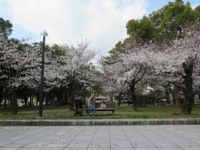 Cherry blossoms in Peace Memorial Park