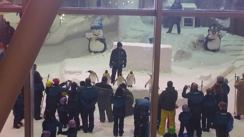 penguins, emirates mall
