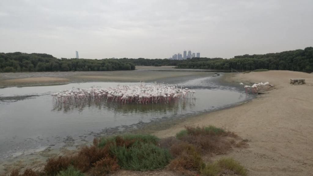 Ras Al Khor, animal sanctuary, flamingo