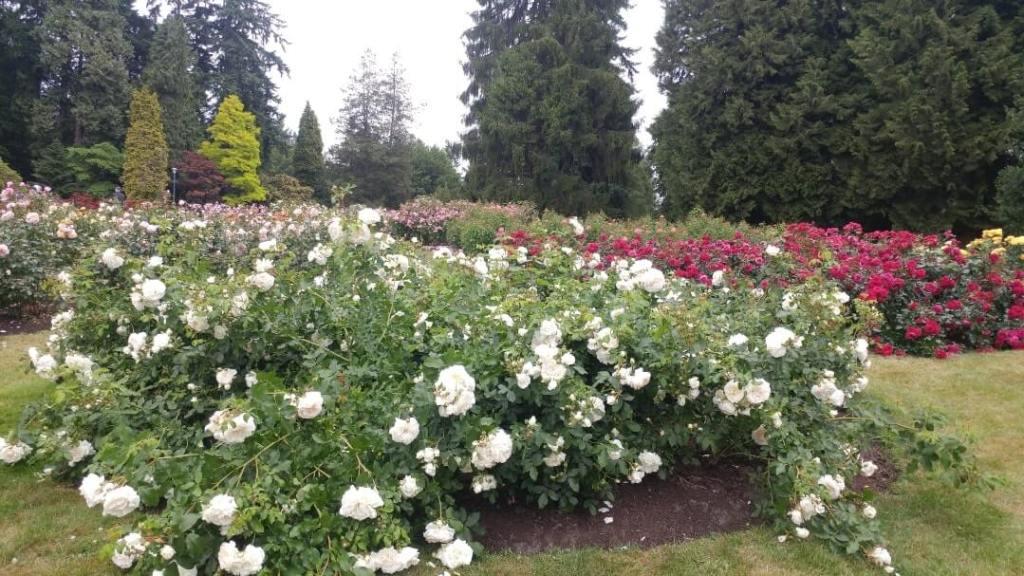 Rose garden, flowers, park