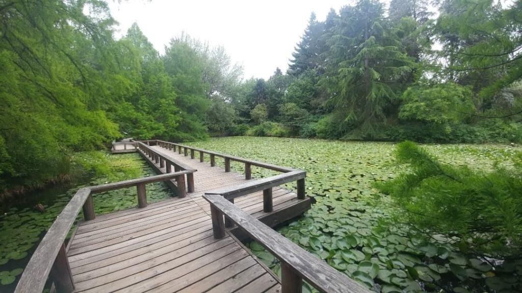 bridge, pond, Vancouver