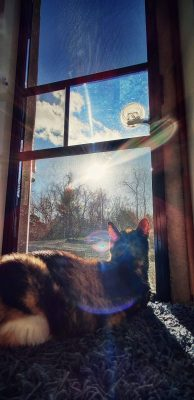 Lizzi the cat soaking up the sunshine at the screen door of our Casita travel trailer