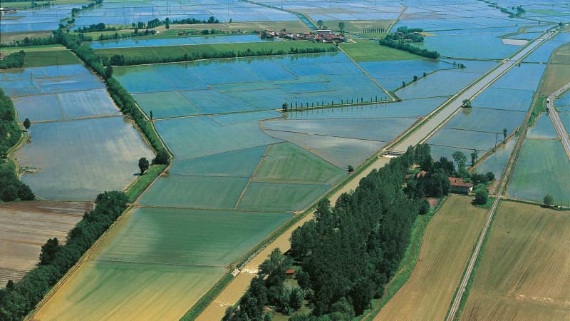 Rice fields in the province of Novara, Piedmont.