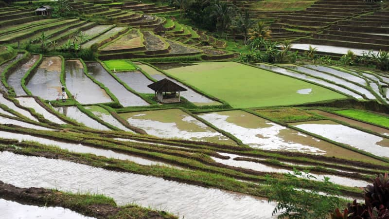 Bali's Tabanan Regency is known for its rice terraces.