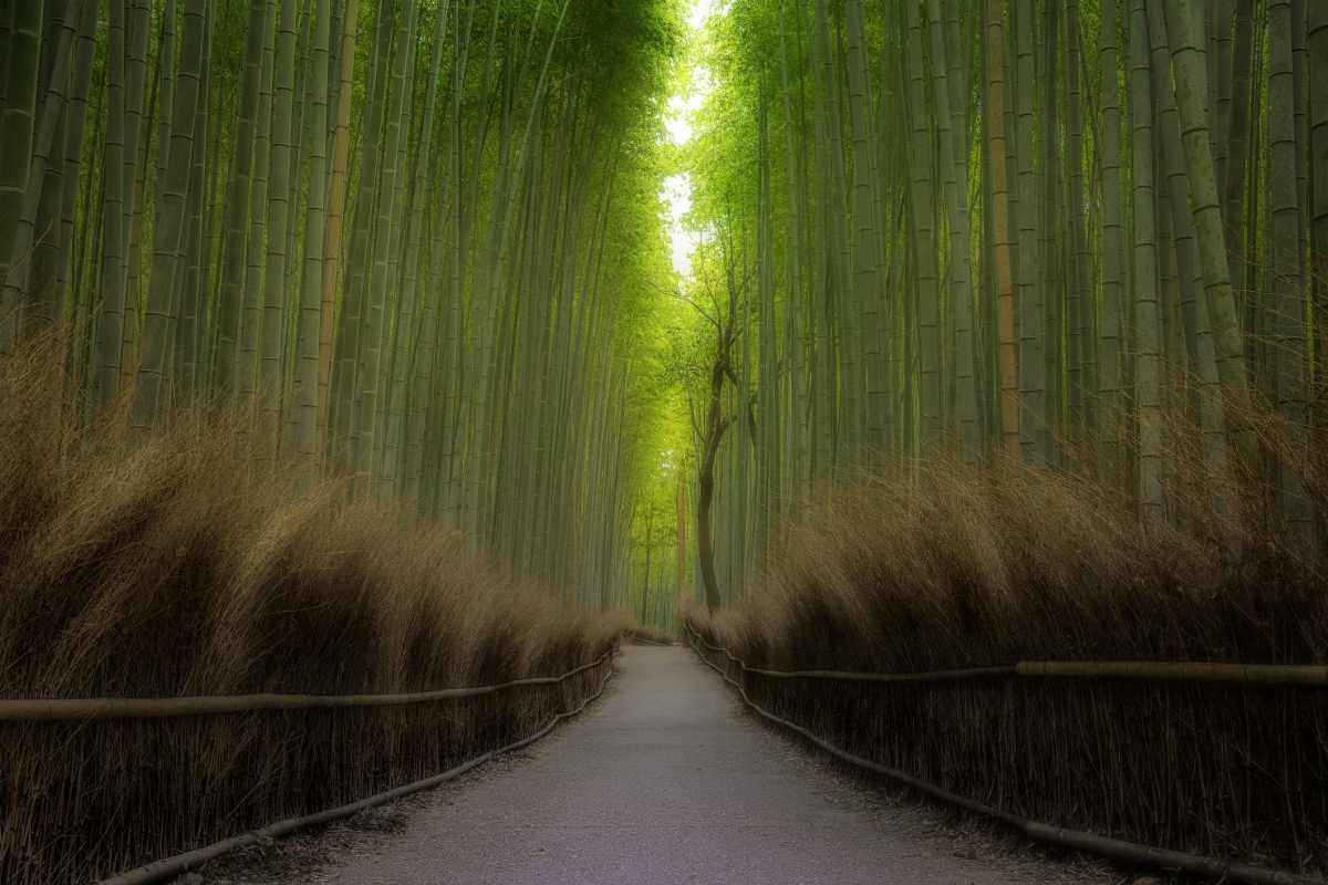 The internet raves about Japan's famous bamboo forest. Here's what it really looks like