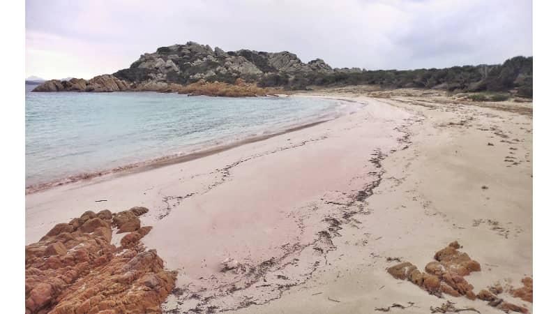 La spiaggia rosa a mezzogiorno 2