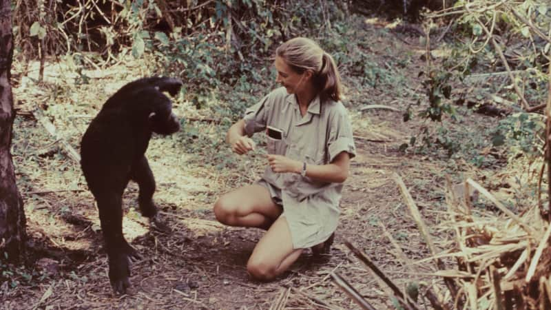 Primatologist Jane Goodall is one of the most popular members of the society today.