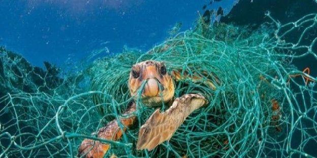 Help to Save green Sea Turtles
