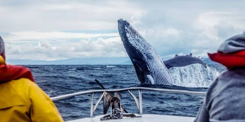 Reykjavík and Húsavík, Iceland Best Places for Humpback Whales Watching