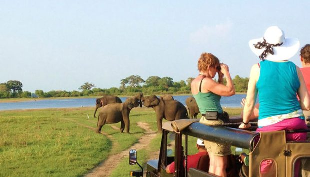 Take a wildlife safari with your family top 5 things to do in Sri Lanka for travelers