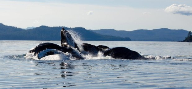 whale watching in Prince of Wales Island Alaska