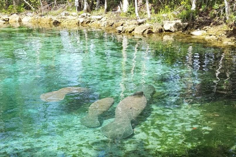 Three Sisters Springs, Crystal River