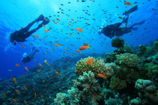 Scuba Diving in Santa Marta Colombia