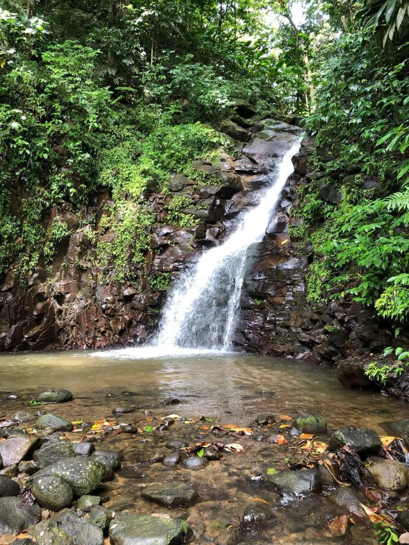 Enbas Saut Waterfall Trail in Edmund Rainforest