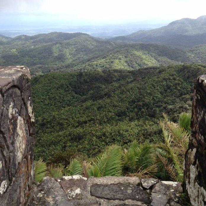 Mt. Britton Tower Puerto Rico Rainforest