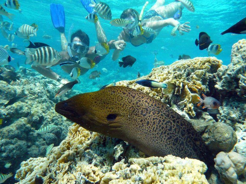 Snorkeling and Scuba Diving in Bora Bora