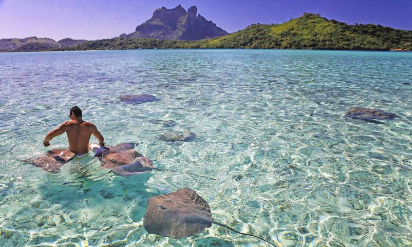 Visit Bora Bora Sharks and Stingrays