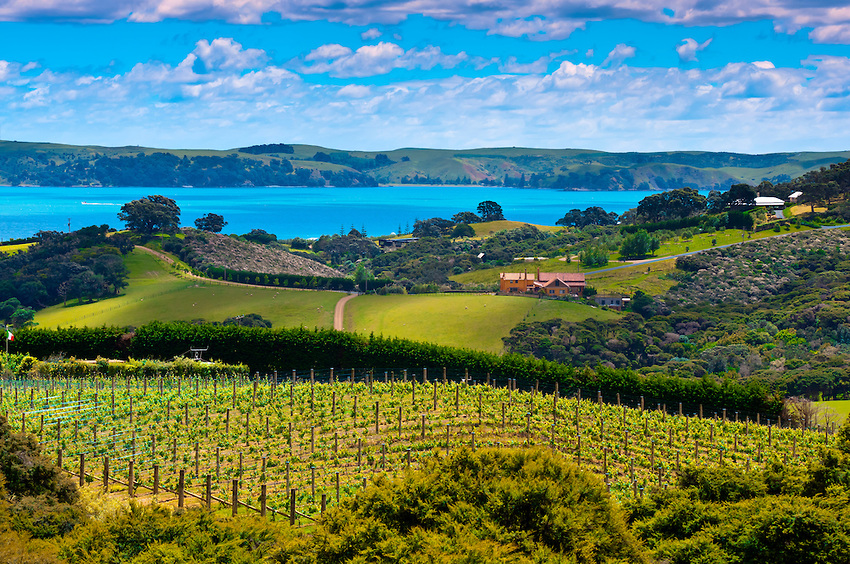 Waiheke Island in New Zealand: The Ultimate Travel Guide