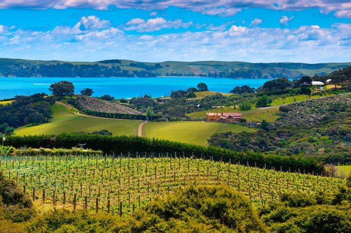 Waiheke Island in New Zealand: The Ultimate Travel Guide