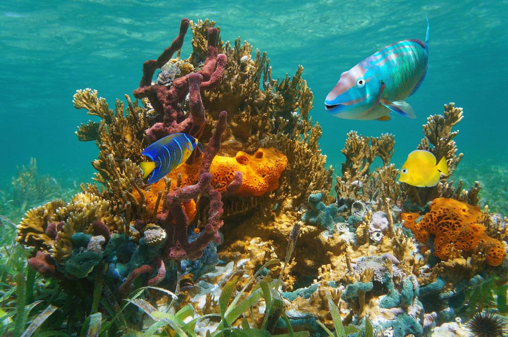 Scuba Diving in the Florida Keys, Florida Summer Bucket List