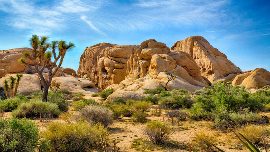 Visit Joshua Tree National Park in Southern California