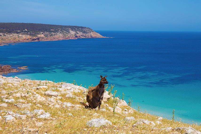 Visit Kangaroo Island in South Australia