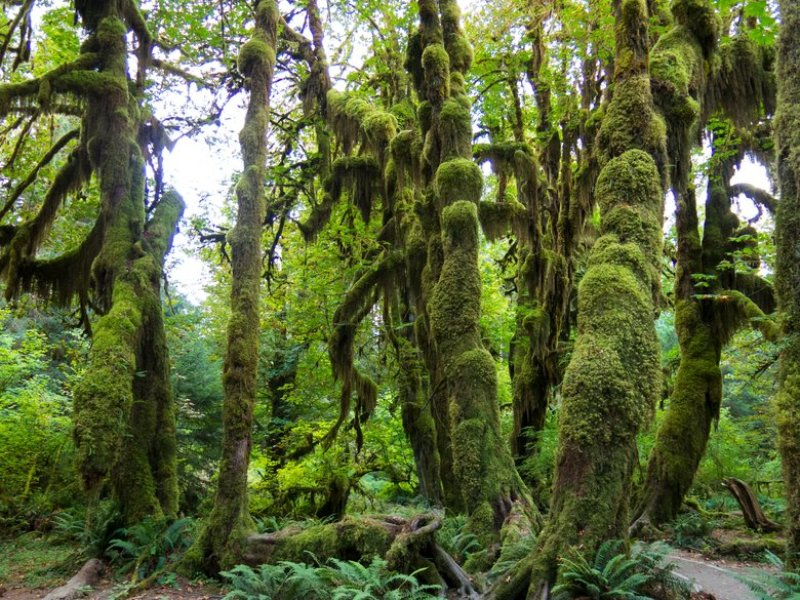 Visit Olympic National Forest Seattle