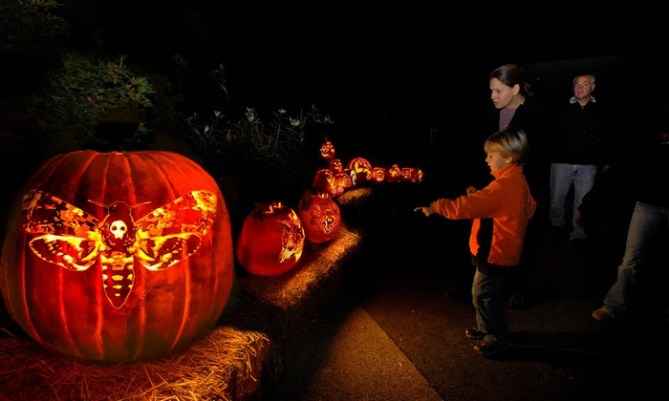 Night of 1000 Jack-o-Lanterns in Chicago Best Halloween Events