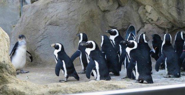 Things to do in Rochester NY Seneca Park Zoo